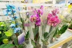 Piękni kolorowi kwiaty w sklepie Fotografia Stock