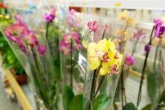 Piękni kolorowi kwiaty w sklepie Obraz Royalty Free