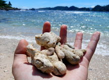 Piękni korale fotografia royalty free