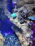 Piękni korale obraz stock