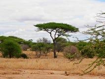 Piękni krajobrazy Afryka Obrazy Stock