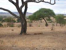 Piękni krajobrazy Afryka Fotografia Royalty Free