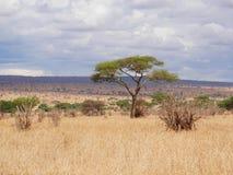 Piękni krajobrazy Afryka Obraz Royalty Free