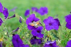 Piękni kwiaty Zdjęcie Stock