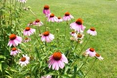 Piękni kwiaty Obraz Royalty Free