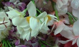 Piękni kwiaty Obrazy Royalty Free
