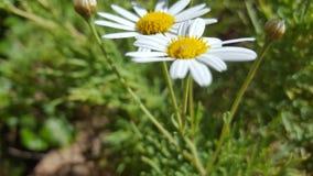 Piękni kwiaty Zdjęcia Stock