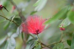 Piękni kwiaty czerwoni Obraz Stock
