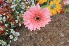 Piękni kwiaty na drewnianym tle Obrazy Stock