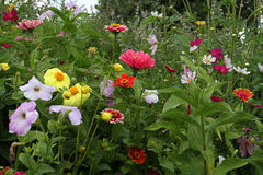 Piękni kwiaty na pokrywie Zdjęcia Royalty Free