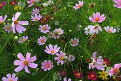 Piękni kwiaty na pokrywie Obrazy Royalty Free