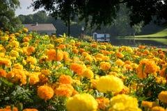 Piękni kwiaty przy trzciny rzeki parkiem w Natchitoches Fotografia Royalty Free