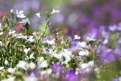 Piękni kwiaty w ogródzie obrazy royalty free