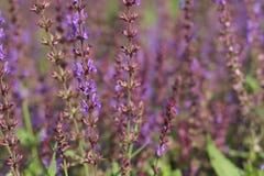 Piękni kwiaty w ogródzie fotografia stock