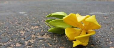 Piękni kwiaty warci ty jeden Fotografia Stock