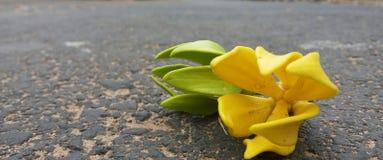 Piękni kwiaty warci ty jeden Obraz Royalty Free