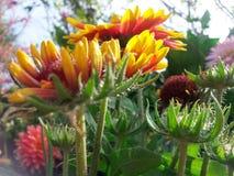 Piękni kwitnienie kwiatów obrazki Fotografia Stock