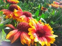Piękni kwitnienie kwiatów obrazki Zdjęcia Royalty Free
