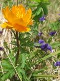Piękni lasów kwiaty Obrazy Royalty Free