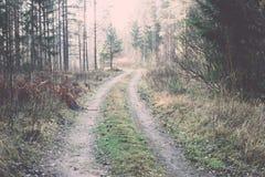 Piękni lekcy promienie w lesie przez drzew Rocznik Zdjęcia Stock