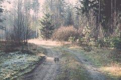 Piękni lekcy promienie w lesie przez drzew Rocznik Obraz Stock