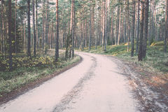 Piękni lekcy promienie w lesie przez drzew Rocznik Obraz Royalty Free