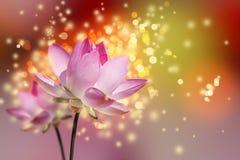 Piękni lotosowi kwiaty Zdjęcia Royalty Free