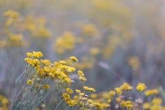 Piękni mali dzicy kwiaty Fotografia Stock
