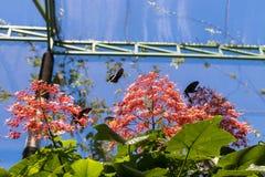 Piękni motyli outoodrs w parku tropikalna Bali wyspa, Indonezja egzotycznych motyli Fotografia Royalty Free