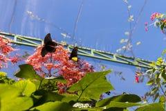 Piękni motyli outoodrs w parku tropikalna Bali wyspa, Indonezja egzotycznych motyli Obraz Stock