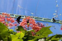 Piękni motyli outoodrs w parku tropikalna Bali wyspa, Indonezja egzotycznych motyli Zdjęcie Royalty Free