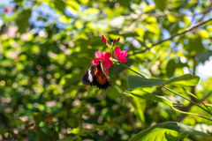 Piękni motyli outoodrs w parku tropikalna Bali wyspa, Indonezja egzotycznych motyli Obrazy Stock