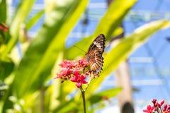 Piękni motyli outoodrs w parku tropikalna Bali wyspa, Indonezja egzotycznych motyli Zdjęcia Stock