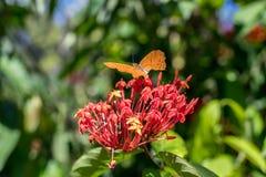 Piękni motyli outoodrs w parku tropikalna Bali wyspa, Indonezja egzotycznych motyli Fotografia Stock