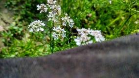 Piękni natura obrazki Fotografia Royalty Free