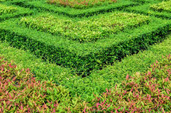 Piękni ogródy. Obraz Stock
