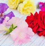piękni przygotowania kwiaty Fotografia Royalty Free