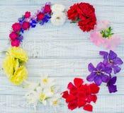 piękni przygotowania kwiaty Zdjęcie Royalty Free