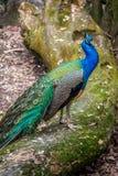 Piękni ptaki przy Taipei zoo Obraz Stock
