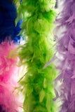 Piękni ptasi piórka dla dekoracyjnych celów Fotografia Royalty Free