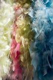 Piękni ptasi piórka dla dekoracyjnych celów Fotografia Stock