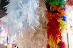 Piękni ptasi piórka dla dekoracyjnych celów Obrazy Royalty Free