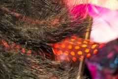 Piękni ptasi piórka dla dekoracyjnych celów Obraz Royalty Free