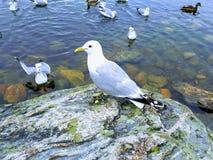 Piękni seagulls i kolory Zdjęcie Stock