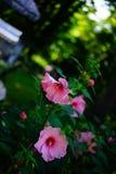 Piękni szpilka kwiaty Zdjęcia Royalty Free