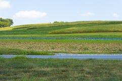 Piękni toczni kukurydzanego pola wzgórza w Pennsylwania Fotografia Stock