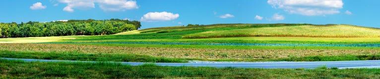 Piękni toczni kukurydzanego pola wzgórza w Pennsylwania Obrazy Royalty Free
