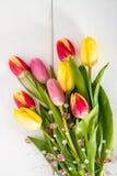 piękni tulipany na drewnie Zdjęcia Royalty Free