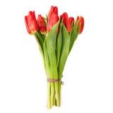 Piękni tulipany nad bielem Fotografia Stock