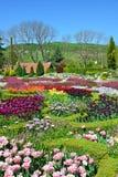 Piękni tulipany w ogródzie Obraz Stock